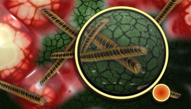 Источники бактерий в вашем доме