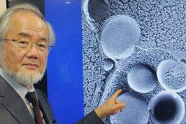 Нобелевскую премию по медицине получит японский учёный