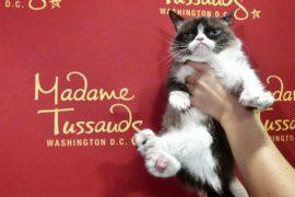 «Сердитый кот» побывал в Музее мадам Тюссо и на Бродвее