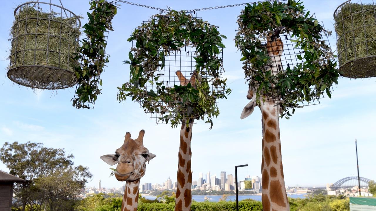 Зоопарк Сиднея отметил 100-летний юбилей