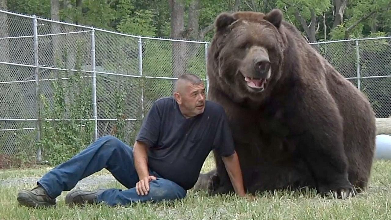 Про дружбу человека и медведя
