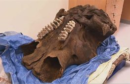 Почти целый скелет мастодонта нашли в Мичигане