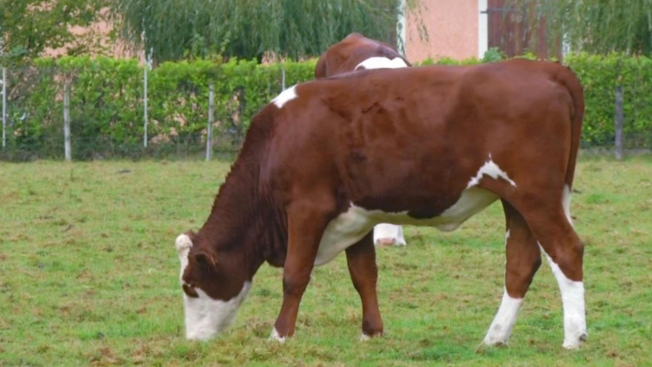 «Кто тут босс?!»: французские фермеры диктуют цены на молоко