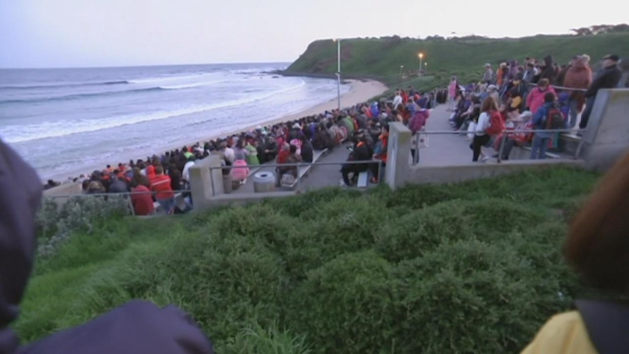 Парад пингвинов на острове Филлип собирает тысячи зрителей