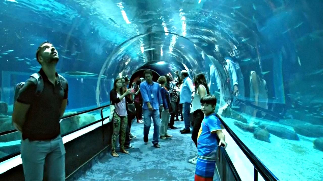В Рио откроют самый большой аквариум в Латинской Америке