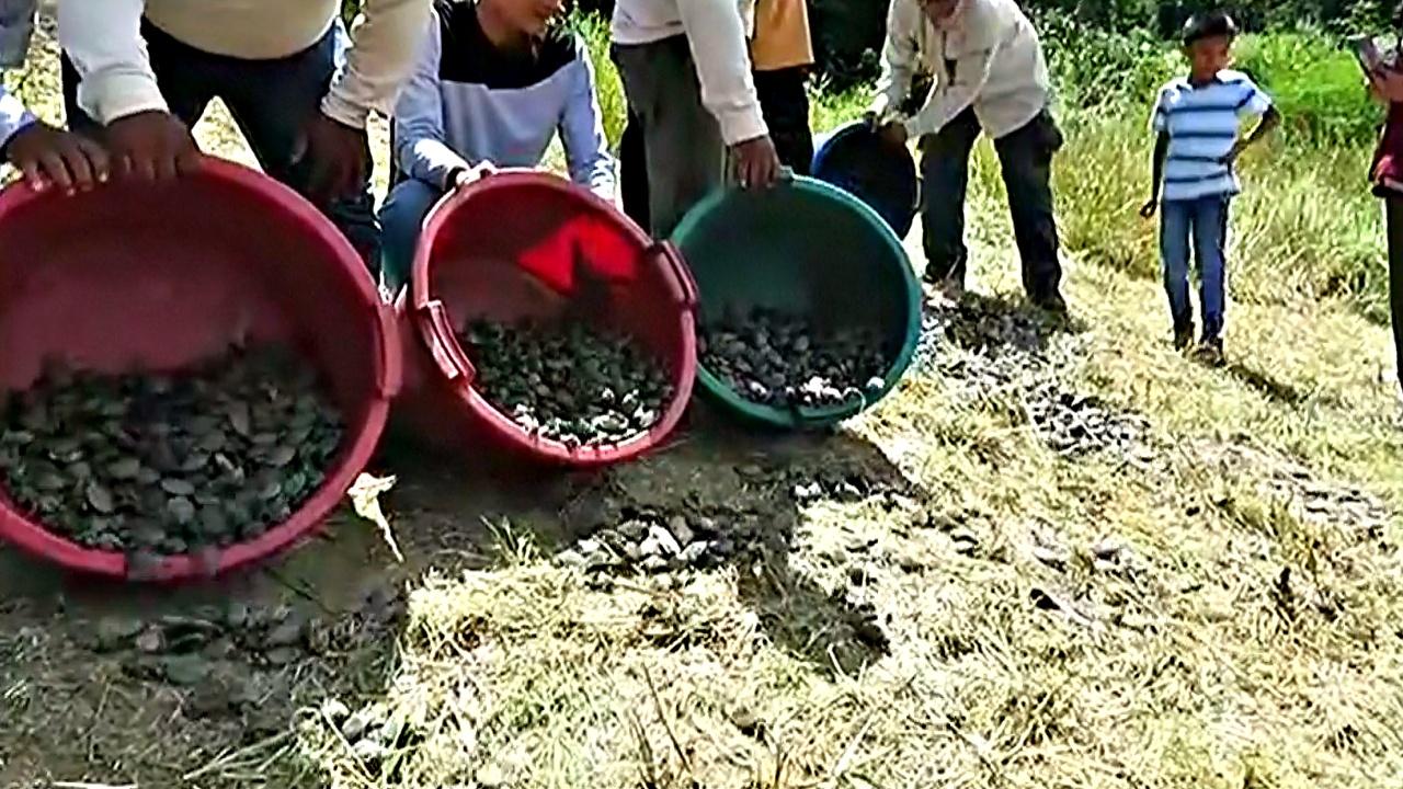 Перу: 17 000 черепашат выпустили в Амазонку
