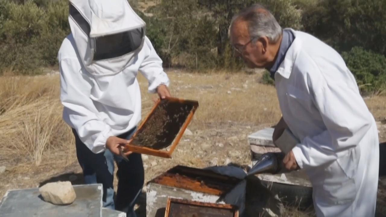 Пчеловодство сдружило грека и турка на Кипре