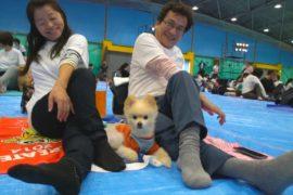 Япония: самое массовое занятие йогой с собаками