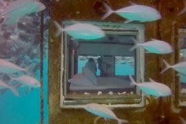 Подводный отель: поспать в окружении рыбы