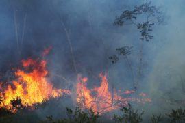 В семи регионах Перу объявлено ЧП из-за пожаров