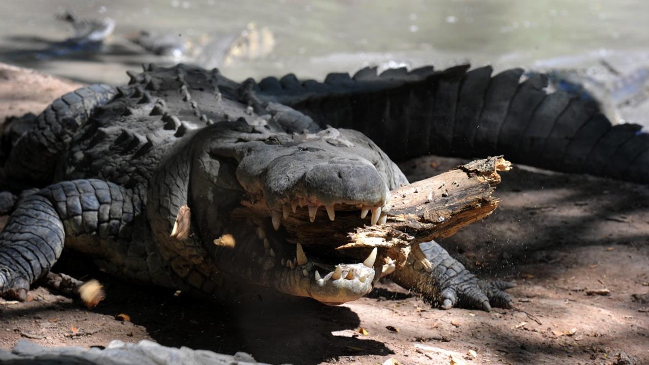 Индия: крокодилы вышли из реки в городе