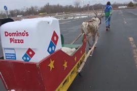 Пиццу в Японии хотят доставлять на оленях