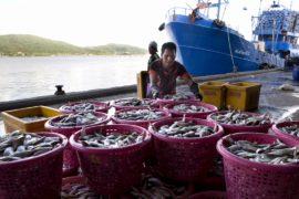 Тайским рыбакам грозят убытки из-за изменения климата