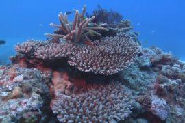 Барьерный риф: зафиксирована самая масштабная гибель кораллов
