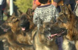 От ши-тцу до немецких догов: в Пакистане прошло шоу собак
