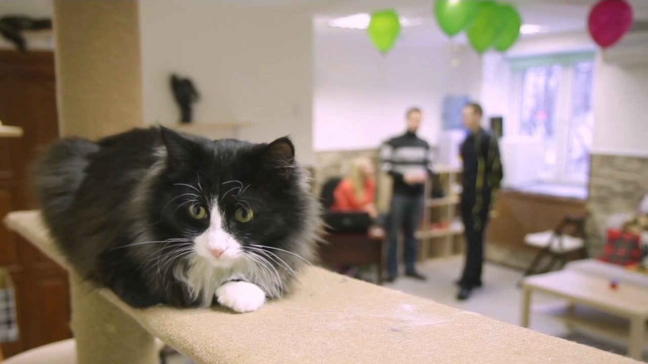Кафе в Челябинске предлагает пообщаться с кошками