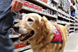 США: ветеран и его собака-помощник стали звёздами супермаркета