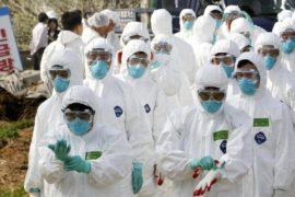 Южная Корея: наивысший уровень угрозы из-за птичьего гриппа