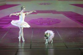 «Щелкунчика» показывают в США с собаками на сцене