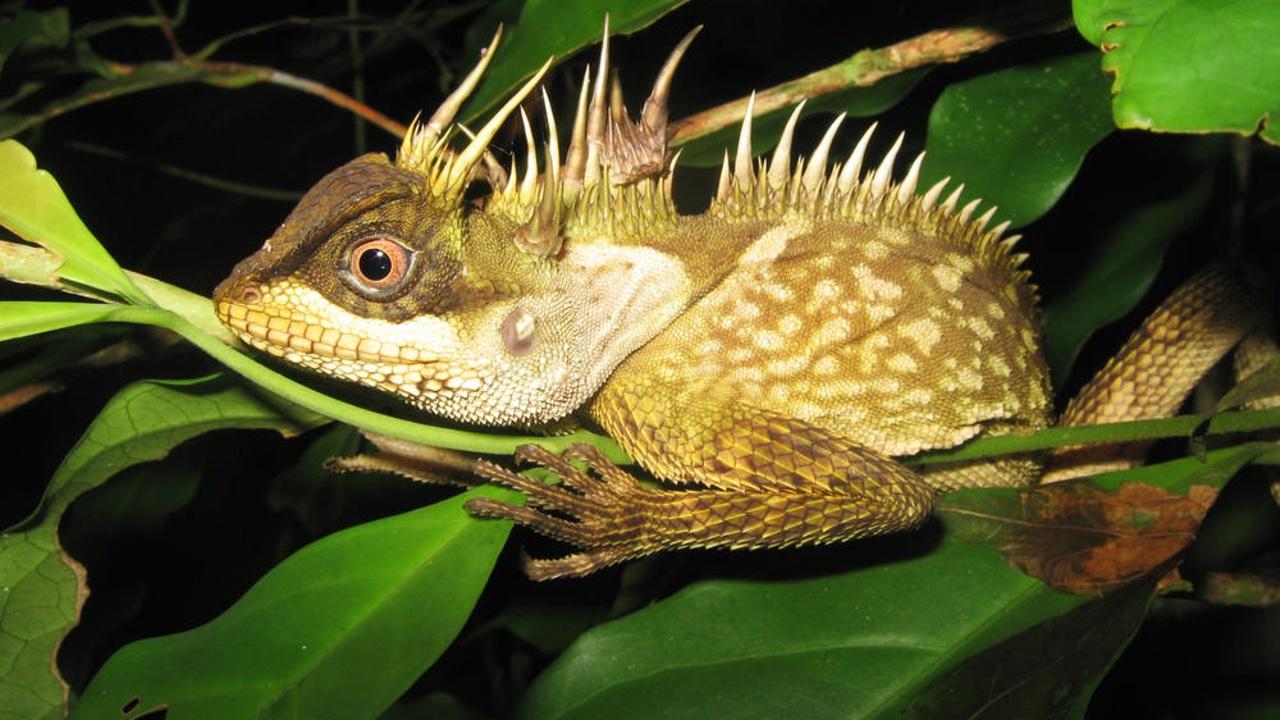 У реки Меконг нашли 163 новых вида животных и растений