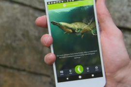 Утконосов будут спасать при помощи приложения