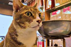 Кошки в магазинах Гонконга очаровали голландского фотографа