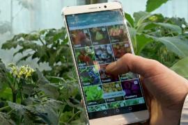Приложение помогает определить болезни растений