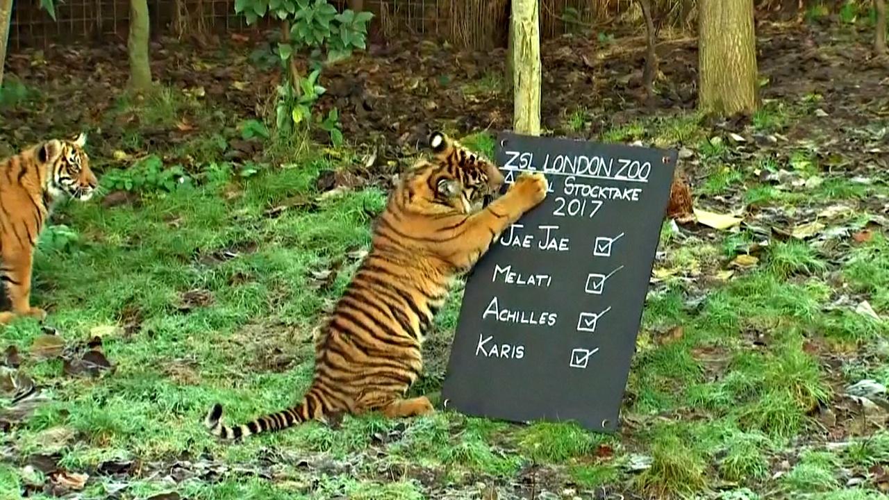 В Лондонском зоопарке начался подсчёт животных