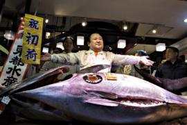 На рыбном аукционе в Токио продали тунца за $615 000