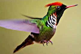 Бразилия искушает туристов и орнитологов разнообразием птиц