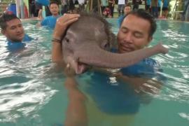 Таиланд: раненого слонёнка лечат купаниями