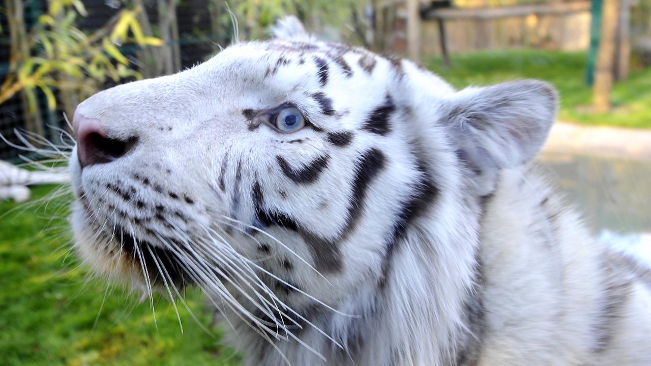 Самого популярного питомца выбрали в зоопарке в Перу