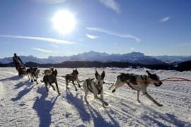 В Альпах проходит суровая гонка на собачьих упряжках
