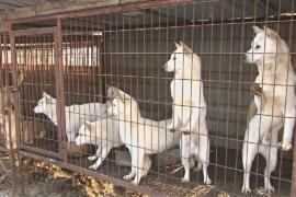 В Южной Корее спасли собак, выращенных на еду