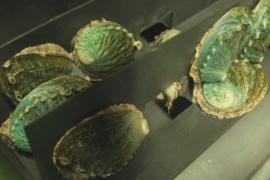 Выращивание моллюсков – прибыльный бизнес в Испании