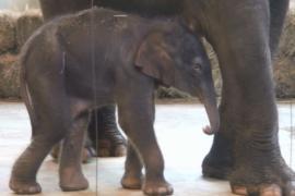 В зоопарке Ростова родился слонёнок