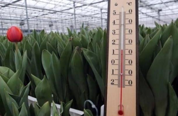 Почему важно поддерживать правильную температуру в теплице?