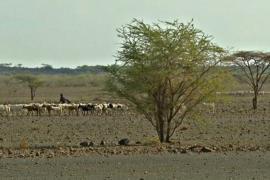 1,3 млн кенийцев стоят перед лицом голода из-за засухи