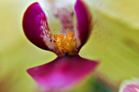 В Лондоне фестиваль орхидей посвятили Индии