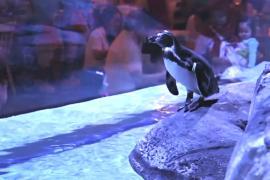 Пингвины развлекают посетителей в ресторане Джакарты