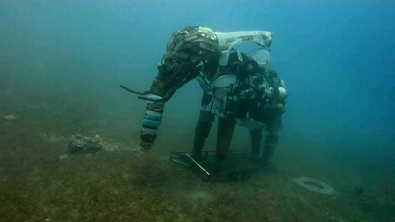 Подводный музей в Красном море будет спасать экосистему