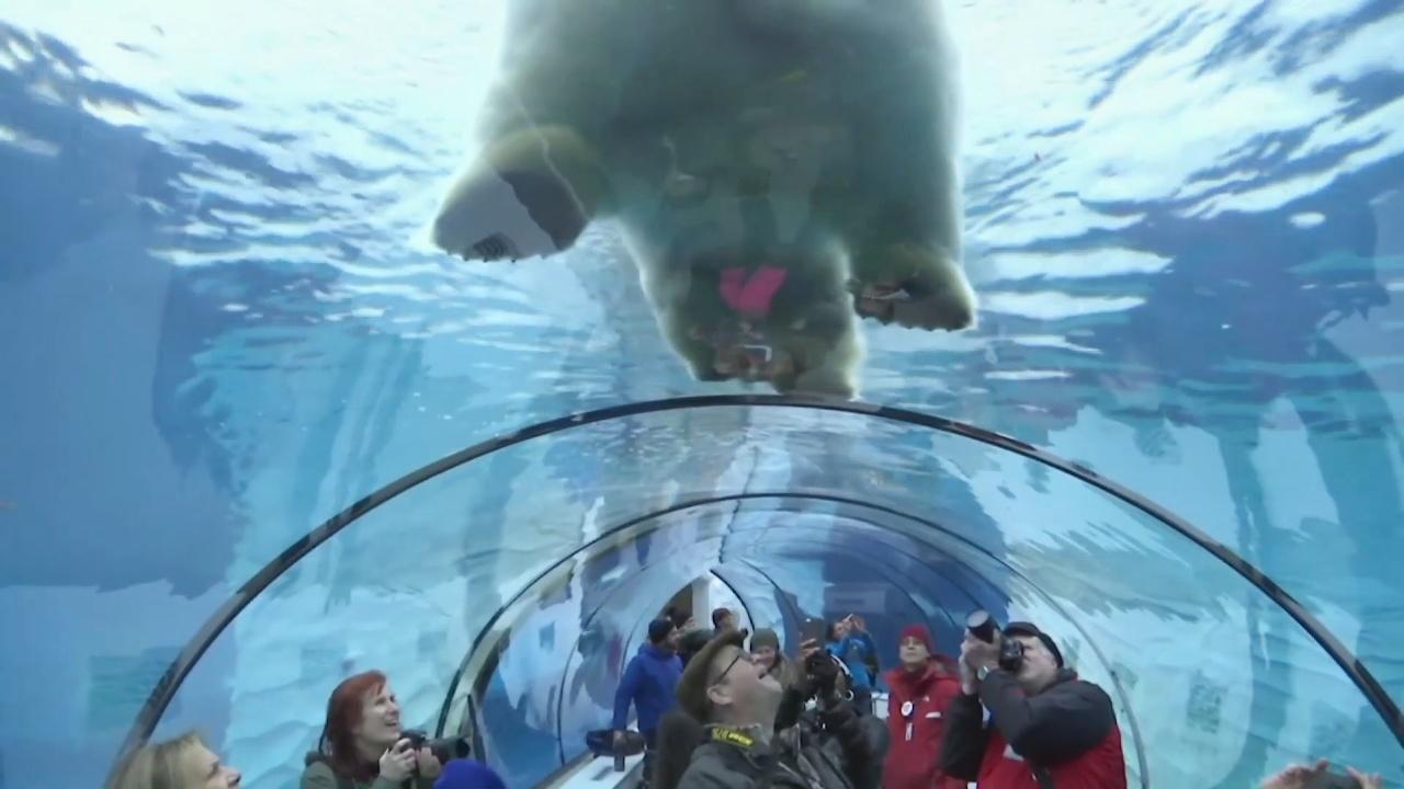 Как животные в зоопарке Детройта День св. Валентина отмечали