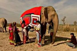 В Индии слонам вяжут свитеры