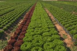 Нехватка салата латука в ЕС продлится до конца марта