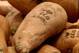 Овощи в супермаркете помечают лазерами