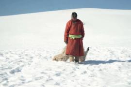 Из-за морозов Монголия второй год подряд страдает от бескормицы