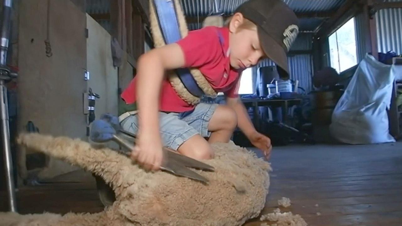5-летний австралиец профессионально стрижёт овец