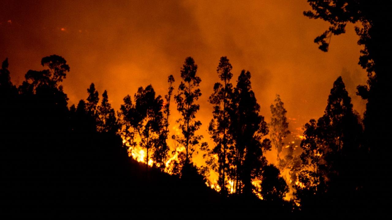 3000 человек эвакуированы в Чили из-за нового пожара