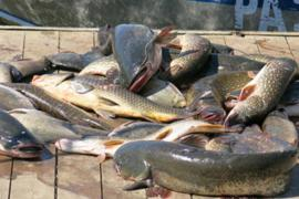 Особенности рыбалки в Астрахани
