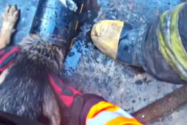Собаку, застрявшую в стальной трубе, спасли пожарные